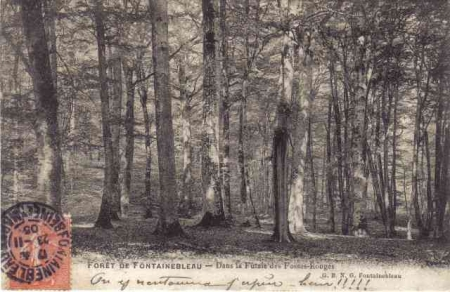Arbres remarquables